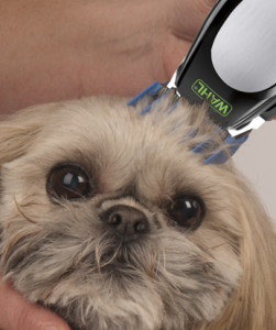 Proffesional Dog Clippers