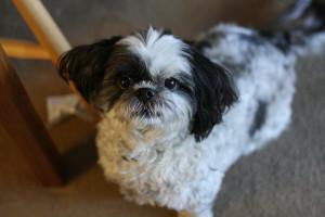 How Often Should I Groom My Dog?
